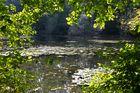 Rheinauenidylle