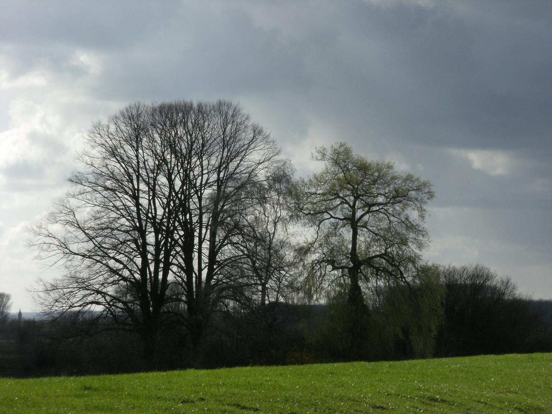 Rheindeich bei Hüthum II