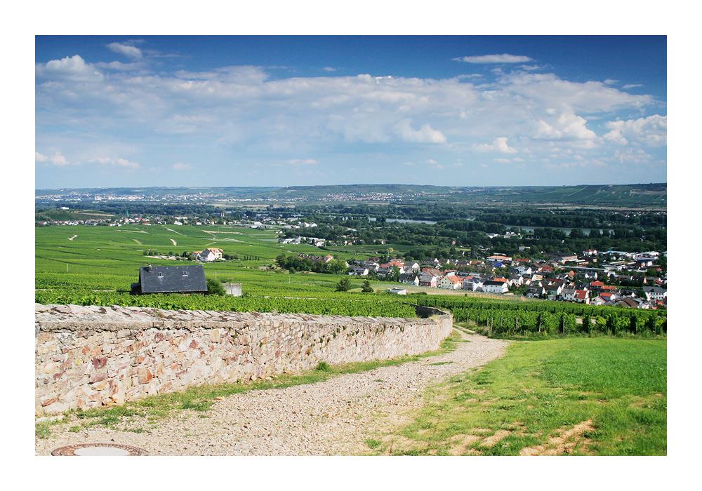 Rheingau [3]