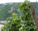 Rheingau ~ Landschaft im Kontrast ~ Bild 13