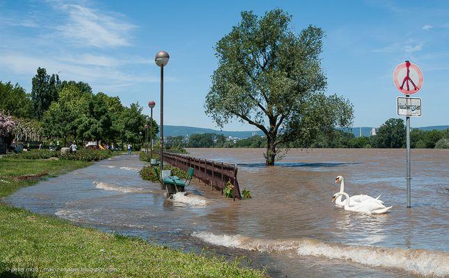 Rheinhochwasser in Mainz im Juni