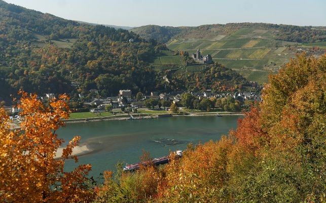 Rheinsteig vom Panoramablick auf Bacharach