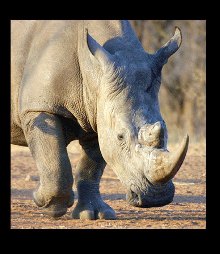 Rhino Charging