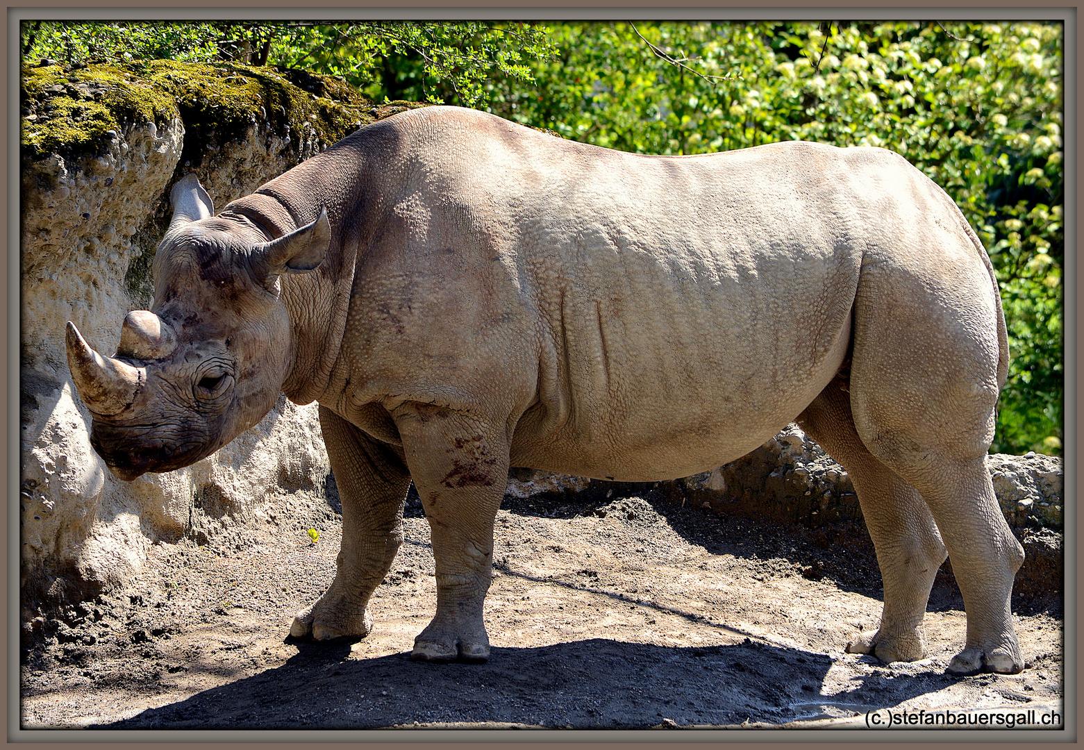 """Rhino."""