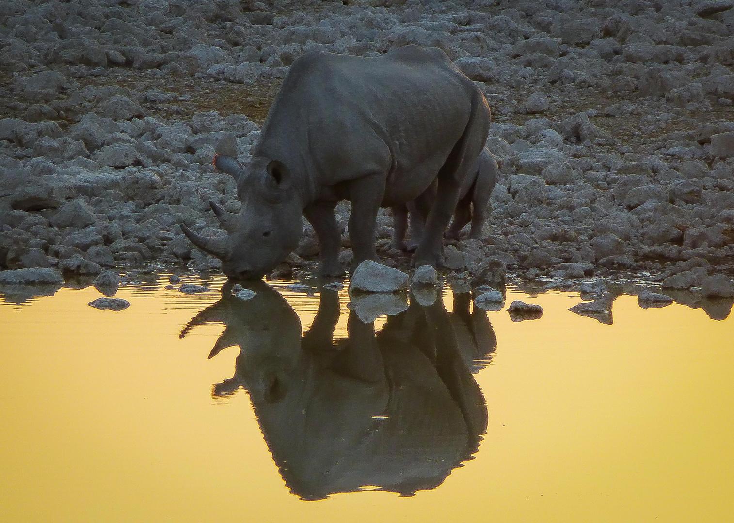 Rhinofamily