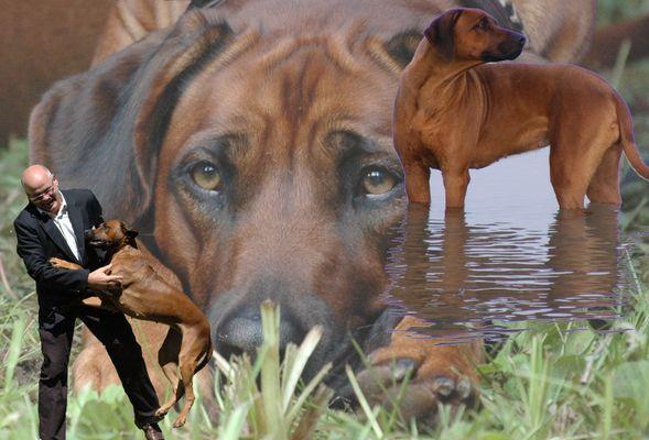 Rhodesian Ridgeback - Erinnerungen
