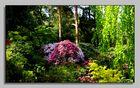 Rhododendorn