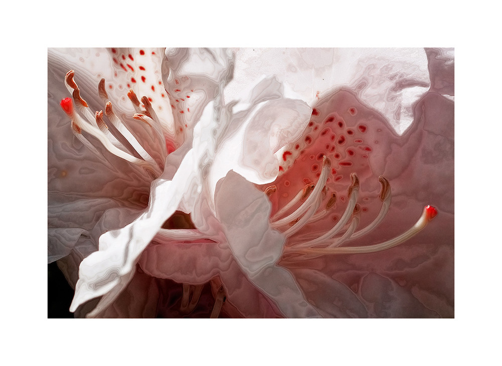 .. Rhododendron Art #1 ..