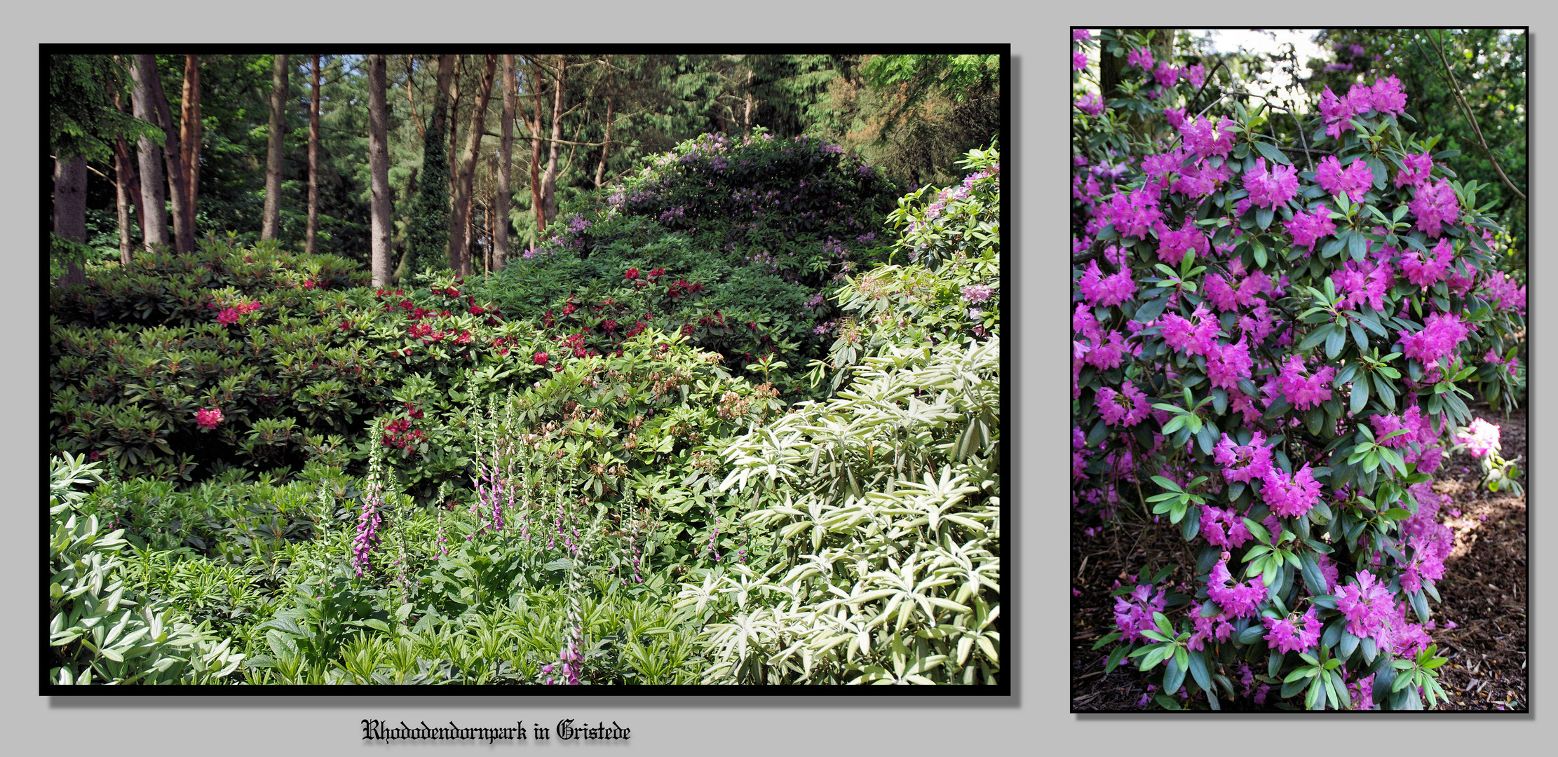 Rhododendronpark 2