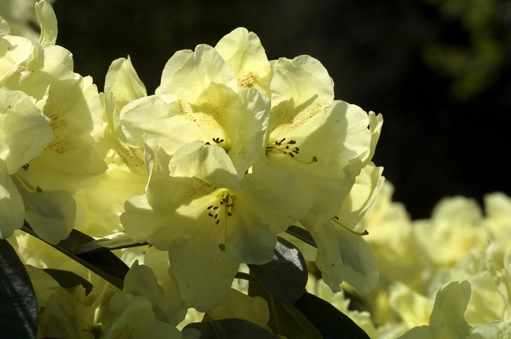 Rhododendronpark Bremen 07