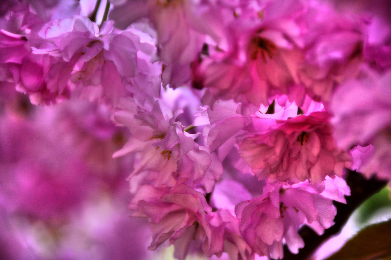 Rhododendronzeit