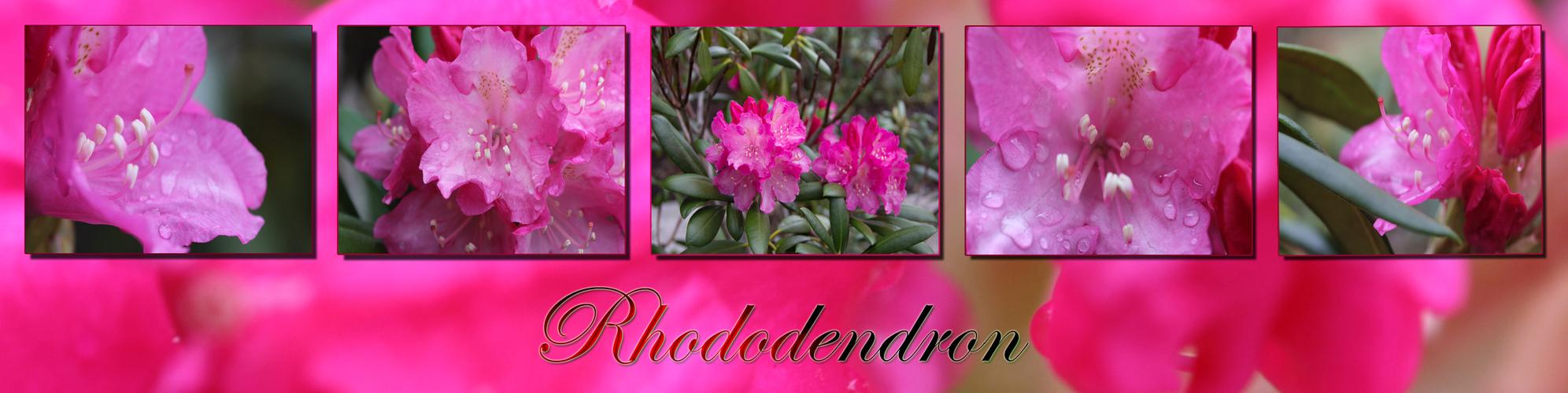 Rhododrendon - Collage