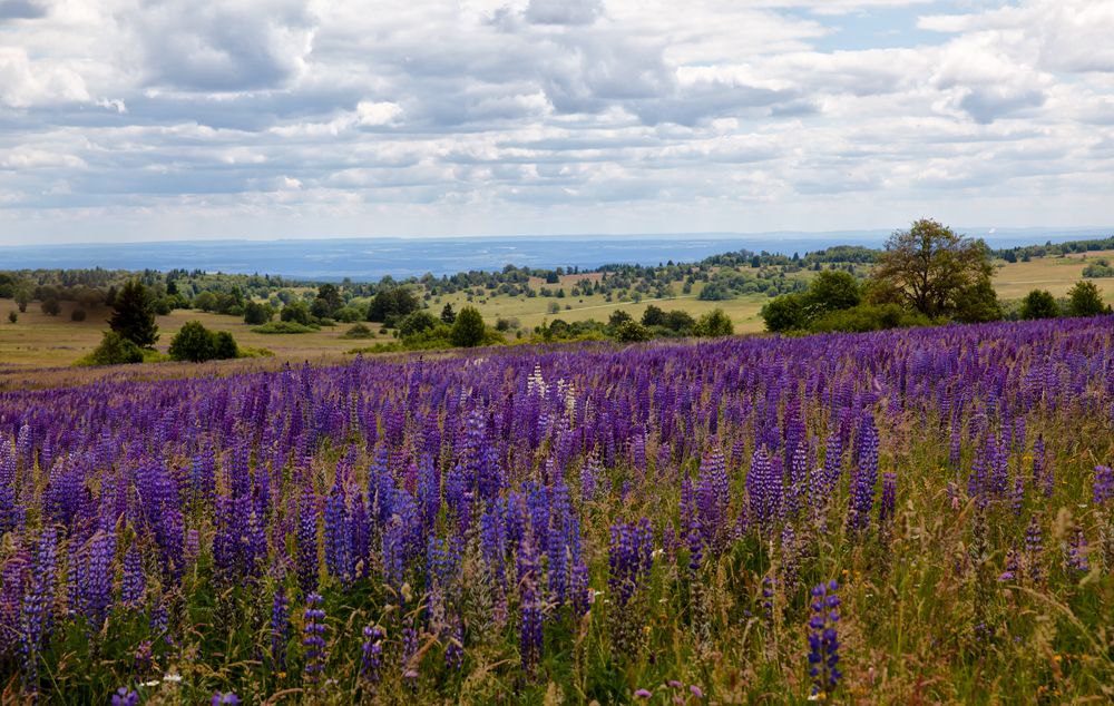 Rhön in lila und blau