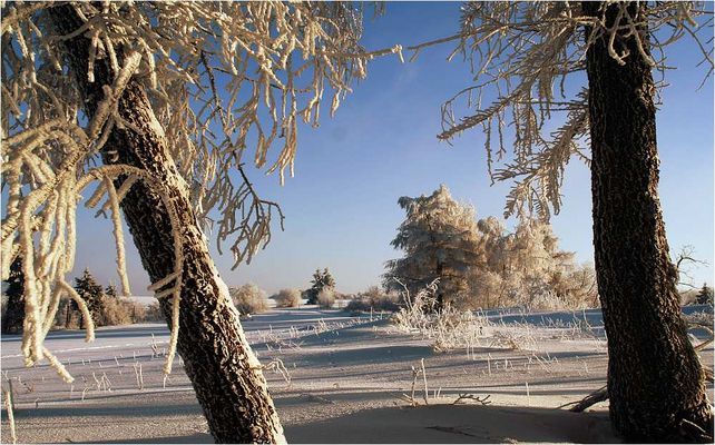 Rhön-Winter #2