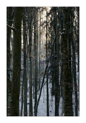 Rhöner Winterimpressionen 2009 #2