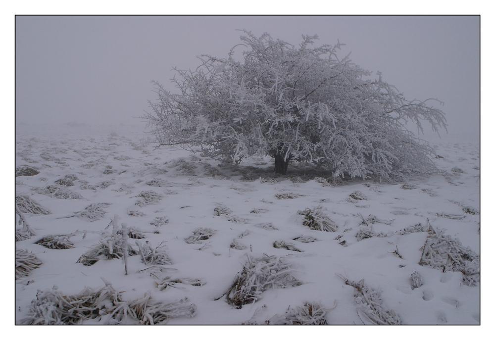 Rhöner Winterwunderland (2)