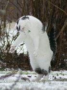 Rhyno hat Spass mit einer Maus