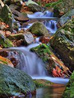 Riachuelo en el Montseny