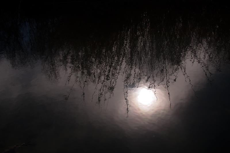 Ribera nocturna