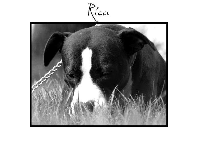 Rica-Schatz