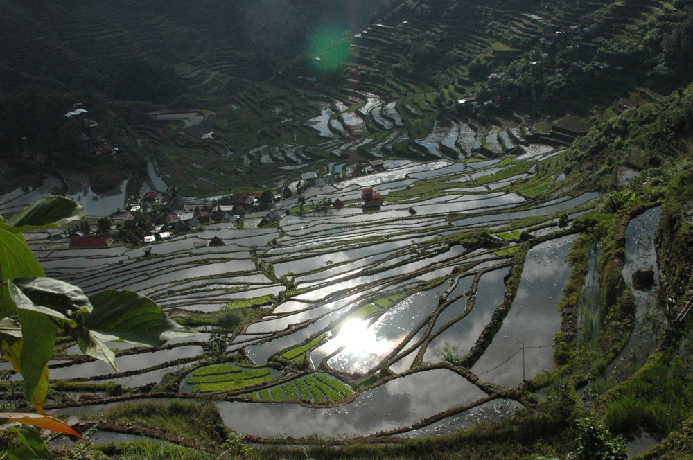Rice terrace North Luzon Philippines