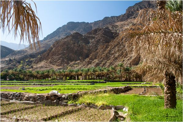 Rice Terraces in the Wadi I