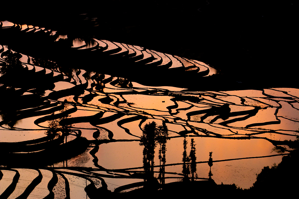 Rice Terraces of Yuanyang - Sunset
