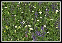 Richtige Blumenwiesen...
