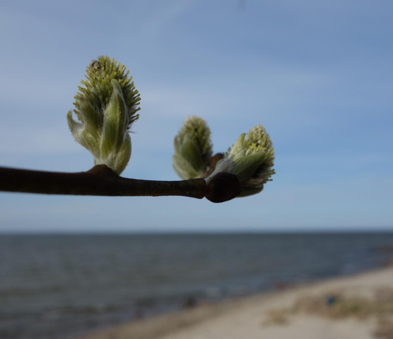 Richtung Frühling