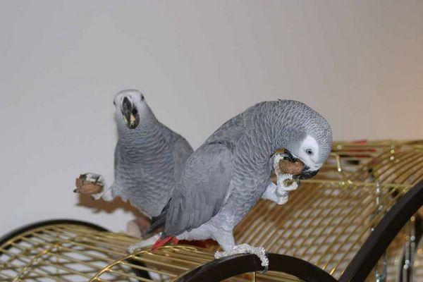 Rico & Cora vernichten eine Walnuss