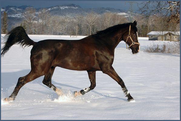 Ricoletto im Schnee