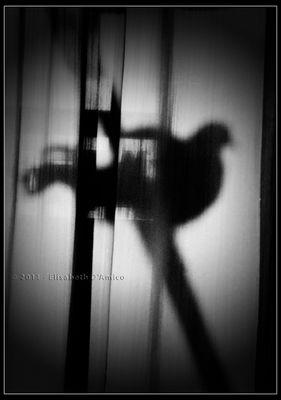 Ricordo di Elisabeth D'Amico - L'ombra dell'anima
