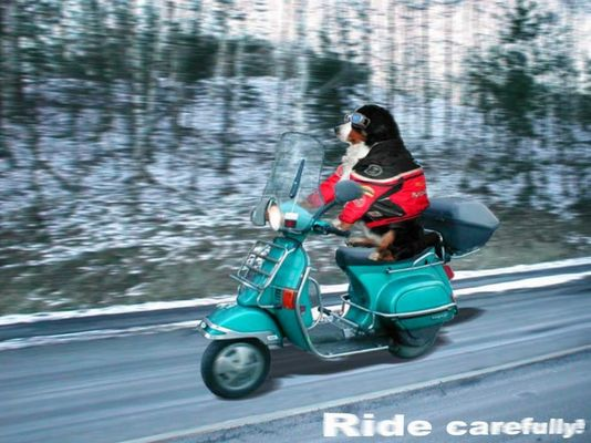 Ride Carefully
