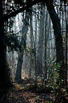 Rideau d'arbres 1