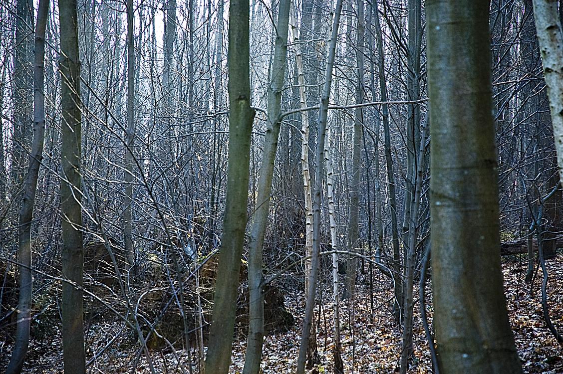 Rideau d'arbres