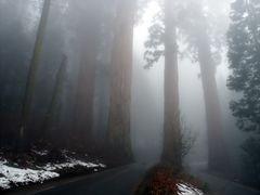 Riesen im Nebel......