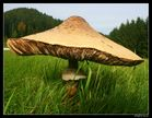 Riesen Pilz