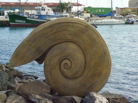 Riesenmuschel gesichtet