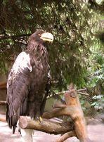 Riesenseeadler im Zoo Heidelberg