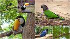 Riesentukan und bunte Papageien Südamerikas
