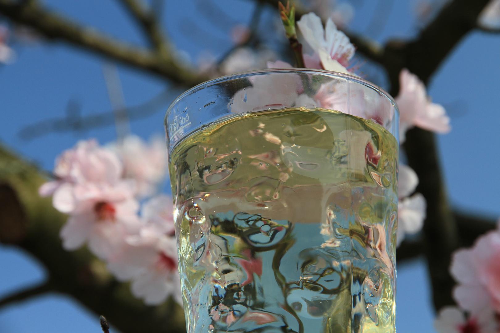 Rieslingschorle im Dubbeglas zur Mandelblüte in Gimmeldingen