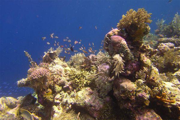 Riff in Wakatobi