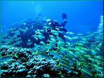 Riff vor Hurghada