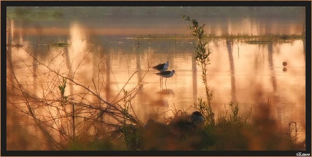 Riflessi aurei di un'alba in palude