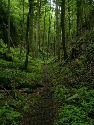 Rimonas Forest