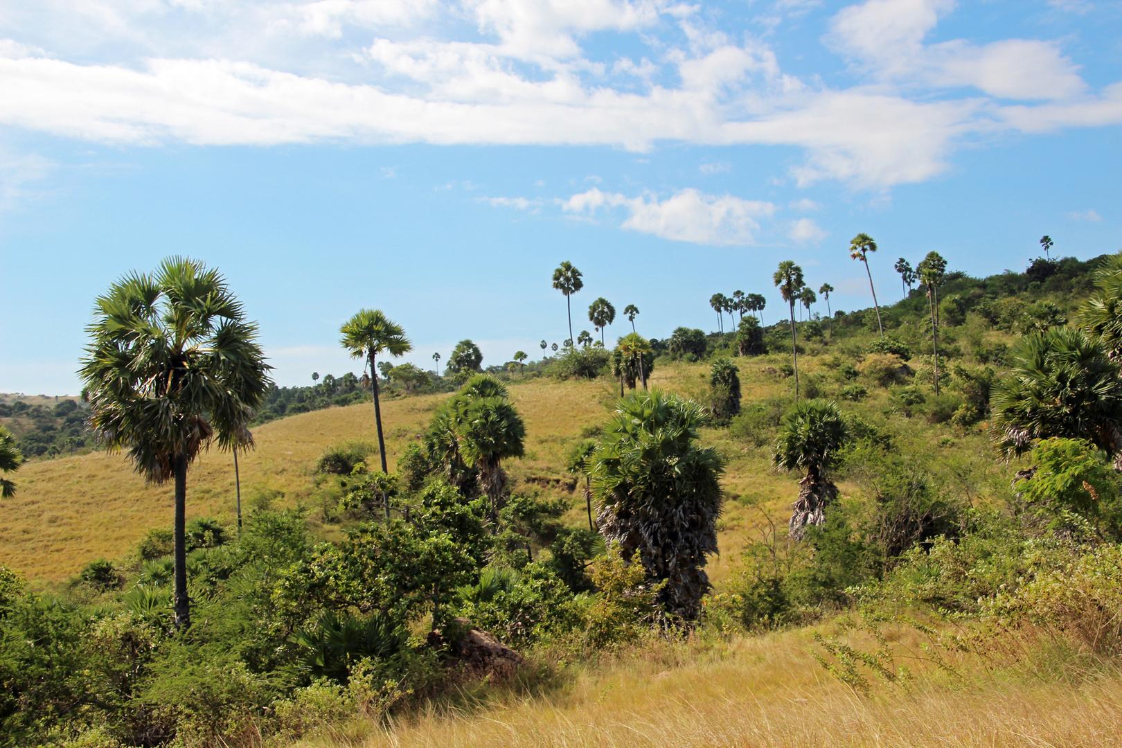 Rinca Island, Landscape