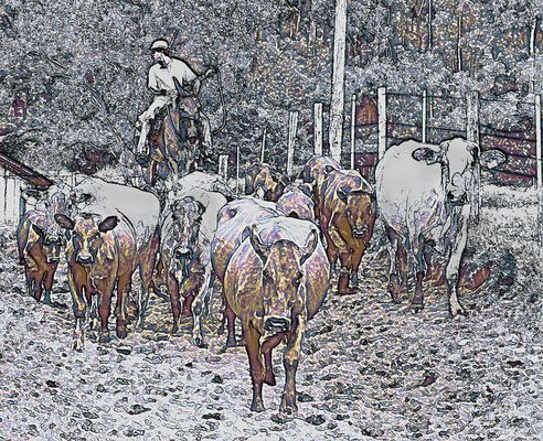Rinderfarm in Brasilien