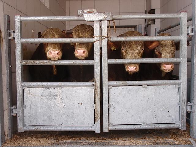 Rindfleisch ist das braunrote Zeugs im Kühlregal