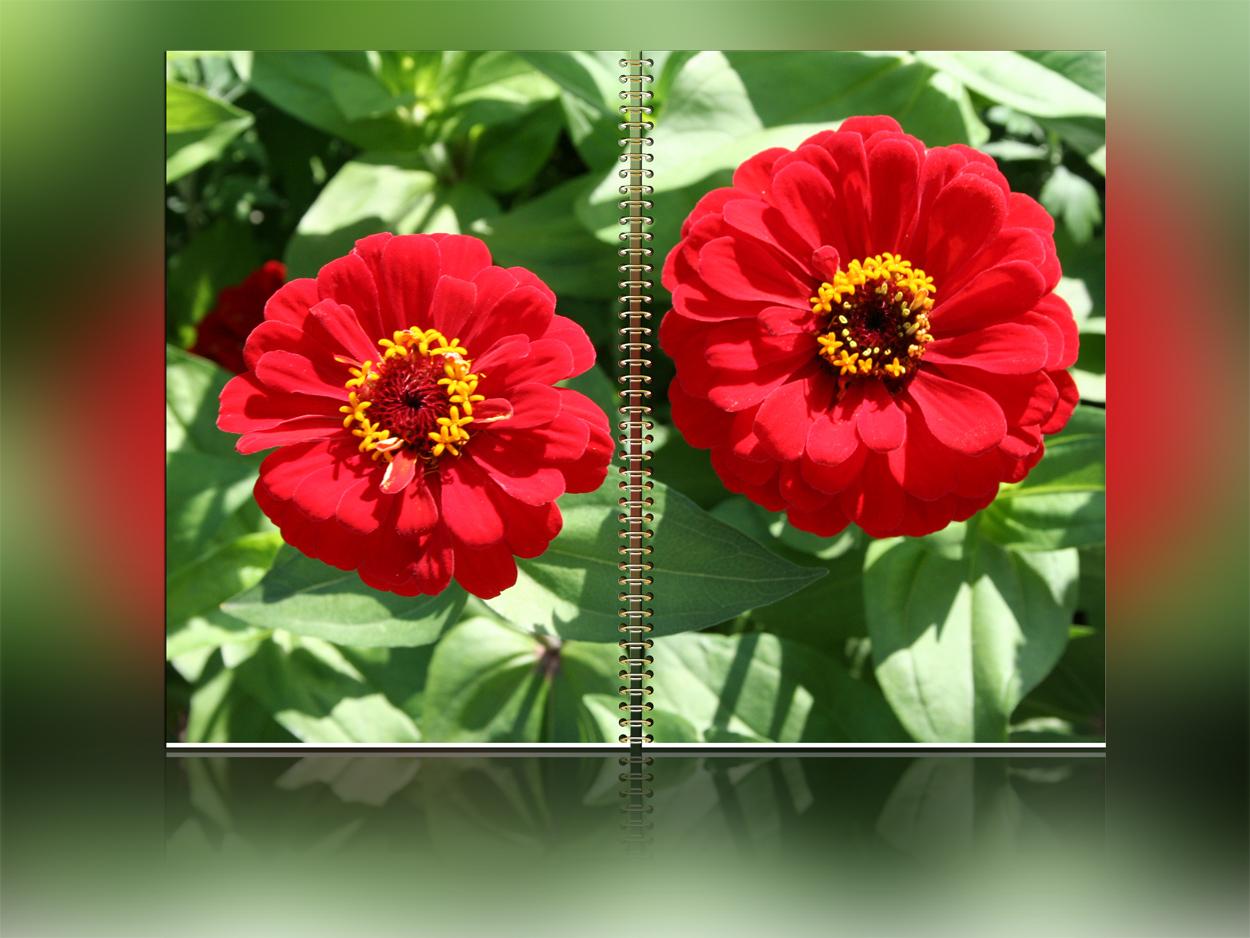 Ringbuch-Format