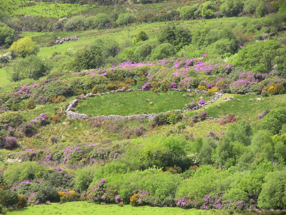 Ringfort at the Healy Pass